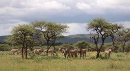 eine Herde von Tieren, die auf einem grasbewachsenen Feld stehen