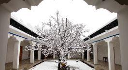 Schneebedeckter Baum im Innenhof des Alchi Hotels Apricot in Alchi, Indien