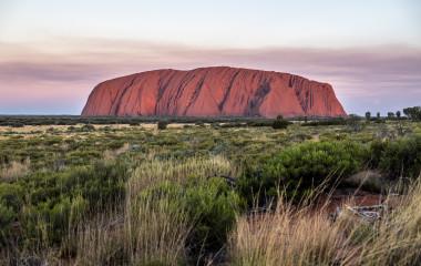 eine Nahaufnahme eines hohen Grasfeldes mit Uluru im Hintergrund
