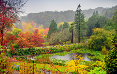 Autumn landscape under the rain in Adelaide Hills, Australia