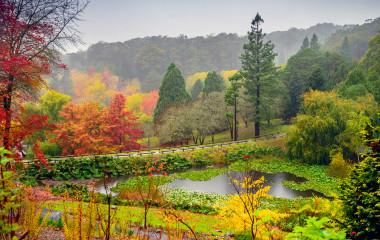 Autumn landscape under the rain in Adelaide Hills, Australia