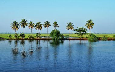 eine Gruppe von Palmen neben einem Gewässer