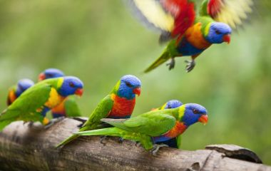Parrot, Come face to face with these Australian wildlife