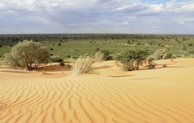 Dune vegetation. Desert landscape in the Kalahari desert, Northern Cape, South africa