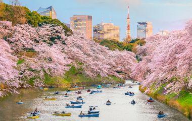 Chidorigafuchi park in Tokyo during sakura season in Japan, Asia