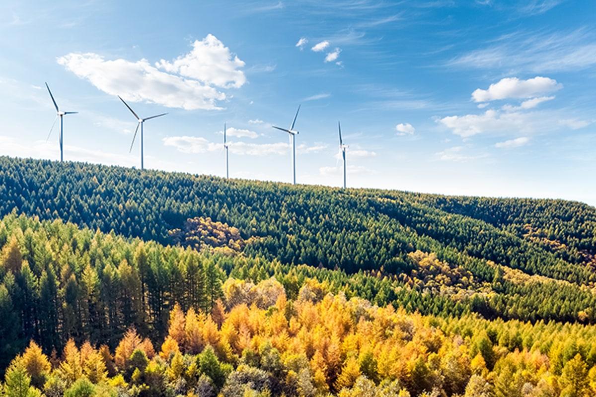 Elektros energijos rinkos apžvalga | 2019 m. rugpjūtis