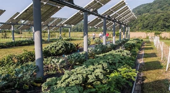 Agrivoltaics Provide Food, Power and Money: A Triple Win