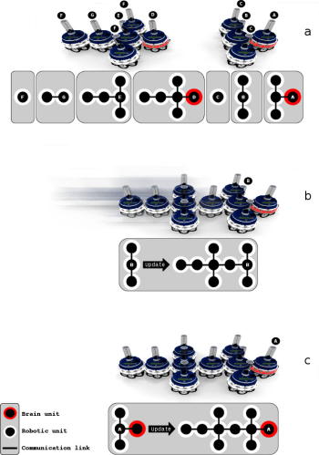 A self-reconfiguring modular robots scheme (Image courtesy of IRIDIA Laboratory.)