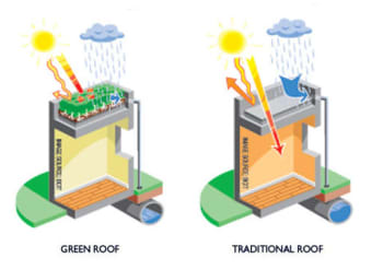 The benefits of a living roof. (Image courtesy of British Columbia Institute of Technology.)