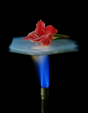 A demonstration of the insulating properties of aerogel: a flower placed on a piece of aerogel suspended over a Bunsen burner.