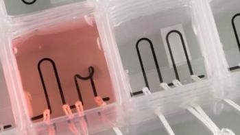 The heart-on-a-chip is entirely 3-D printed with built-in sensors that measure the contractile strength of the tissue, providing scientists with new possibilities for studying the musculature of the heart. (Image courtesy of John Lind/Lori K. Sanders/Harvard University.)
