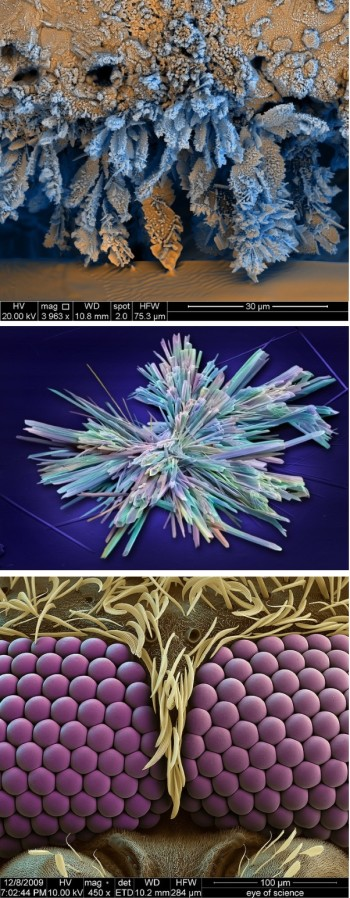 Scanning electron microscope images of iron oxide, sildenafil crystals and mosquito eyes. (Images courtesy of FEI.)