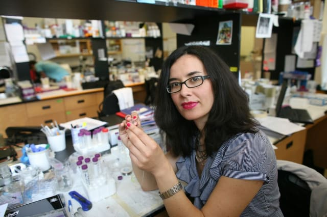 """Professor Milica Radisic and her team hope to use their new """"organ-on-a-chip"""" technology to grow various kinds of """"mini organs"""" that function the way tissues do inside the human body. (Image courtesy of University of Toronto.)"""