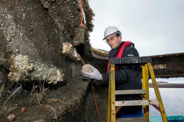 Stéphane Gouret du Naval Group élève un oursin qui s'est installé dans les îles du nord. (Image fournie par Microsoft.)