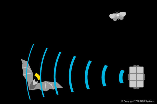 The deterrent system creates constant ultrasonic noise at the same frequency as the bat call, jamming the bat's ability to hear its return echo. (GIF courtesy of NRG Systems.)