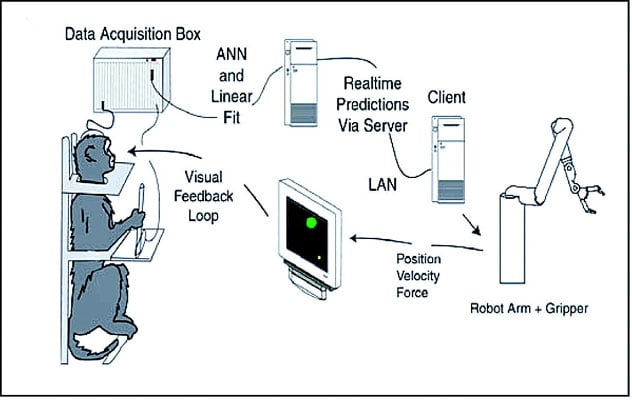 Behavioral setup and control loops for an early BCI, consisting of the data acquisition system, the computer running multiple linear models in real time, the robot arm equipped with a gripper, and the visual display. The pole was equipped with a gripping force transducer. Robot position was translated into cursor position on the screen, and feedback of the gripping force was provided by changing the cursor size. (Image courtesy of Carmena et al. 2005)