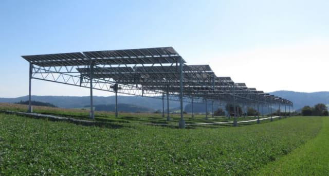 Agrophotovoltaics Solar Farms That Produce Food And