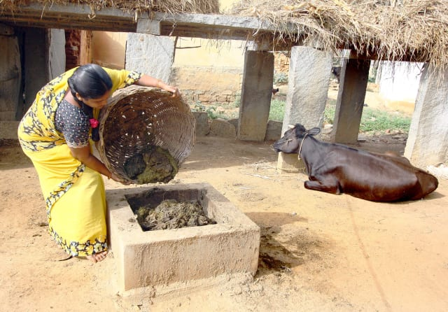 A woman fills a VYVE-funded biodigester with cow dung in Karnataka, India. (Image courtesy of VYVE.)