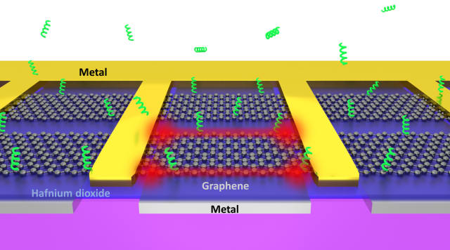 Atomically sharp edges of electrically driven graphene can act as 'tweezers' that rapidly trap biomolecules from the surrounding solution. (Image courtesy of In-Ho Lee/University of Minnesota.)