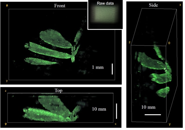 The researchers used the DiffuserCam to reconstruct the 3-D structure of leaves from a small plant. They plan to use the new camera to watch neurons fire in living mice without using a microscope. (Image courtesy of Laura Waller/University of California, Berkeley.)