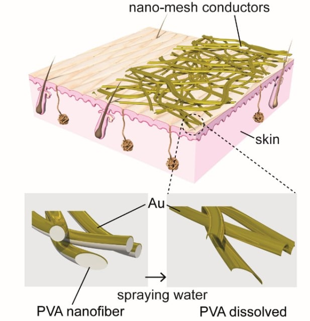 The diagram at top illustrates the structure of gold nanomesh conductors laminated onto the skin surface. The nanomesh, constructed from polyvinyl alcohol (PVA) nanofibers and a gold (Au) layer, adheres to the skin when sprayed with water, dissolving the PVA, as depicted in the enlarged diagrams at bottom. (Image courtesy of Someya Laboratory.)