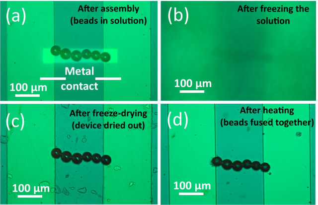 After using optoelectronic tweezers to assemble a line of solder beads (a), the researchers froze the liquid (b) and then reduced the pressure so that the frozen liquid turned directly from a solid into a gas, drying out the device (c). They then heated the beads to fuse them into an electrical connection. (Image courtesy of Shuailong Zhang.)
