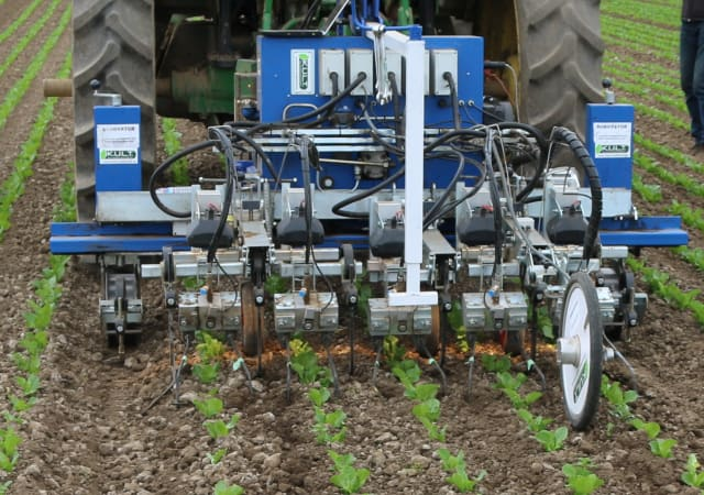 The robotic weeder goes between the crop rows. The rows must be very straight and precise for the weeder to properly do its job. (Image courtesy of Steven Fennimore.)