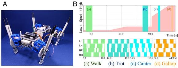 A The quadruped robot, Oscillex 3. B Reproduced changes in step (gait transition phenomenon). (Top) Change in the parameter related to speed (Bottom) The colors represent periods when a leg senses weight on the corresponding leg. The gait transition was demonstrated from walk to trot, to canter, to gallop. (Image courtesy of Akio Ishiguro.)