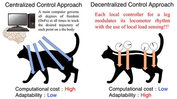 Centralized control approach: A main computer governs all degrees of freedom (DoFs) on the body at all times to track the desired trajectory of each point, resulting in high computational cost and low adaptability to environmental changes. Decentralized control approach: Each local controller for a leg modulates its locomotor rhythm with the use of only local load sensing, resulting in low computational cost and high adaptability. (Image courtesy of Akio Ishiguro.)