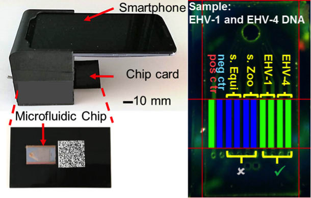 The system uses a commercial smartphone to acquire and interpret real-time images of an enzymatic amplification reaction that takes place in a silicon microfluidic chip that generates green fluorescence and displays a visual read-out of the test. The system is composed of an unmodified smartphone and a portable 3-D-printed cradle that supports the optical and electrical components, and interfaces with the rear-facing camera of the smartphone. (Image courtesy of Micro & Nanotechnology Laboratory/University of Illinois at Urbana-Champaign.)