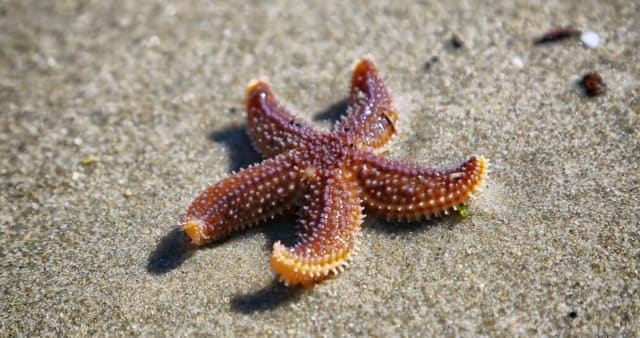 While the sea star may look like it doesn't move, hundreds of the creature's tube feet create a complex and unique way for it to move and attach to terrain and prey. (Image courtesy of Pexels, Emre Kuzu.)