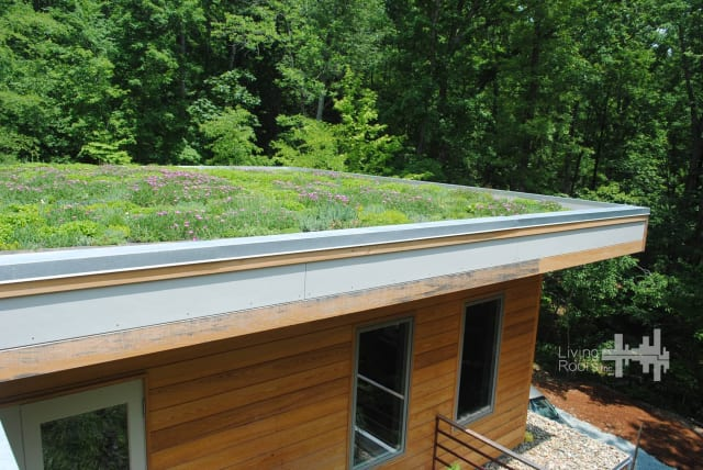 An extensive green roof on a residential building. (Image courtesy of Living Roofs.)