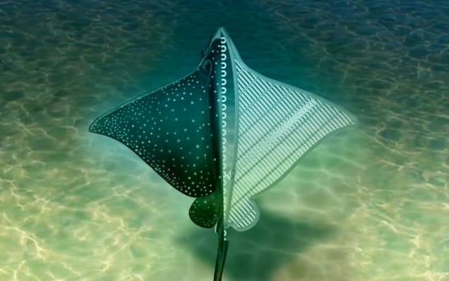 Artist's impression of robotic stingray. (Image courtesy of UCLA.)