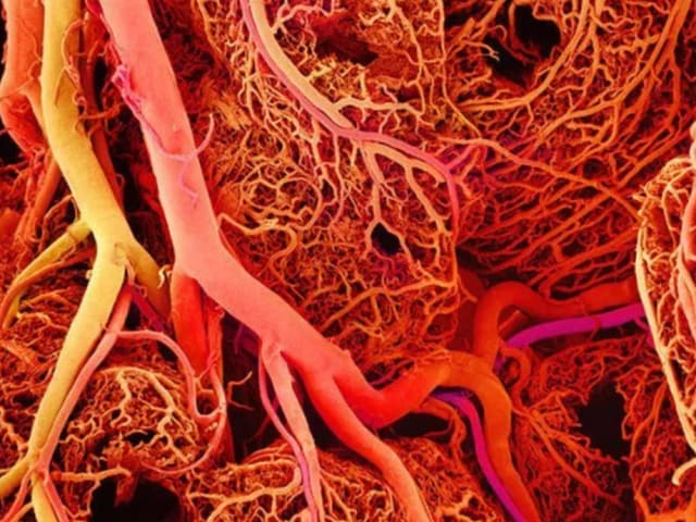 The human circulatory system consists of a complex system of blood vessels that transport blood throughout the body. A new 3D printing technique may allow printed tissue to replace hardened vessels. (Image courtesy of BioFoundations.)