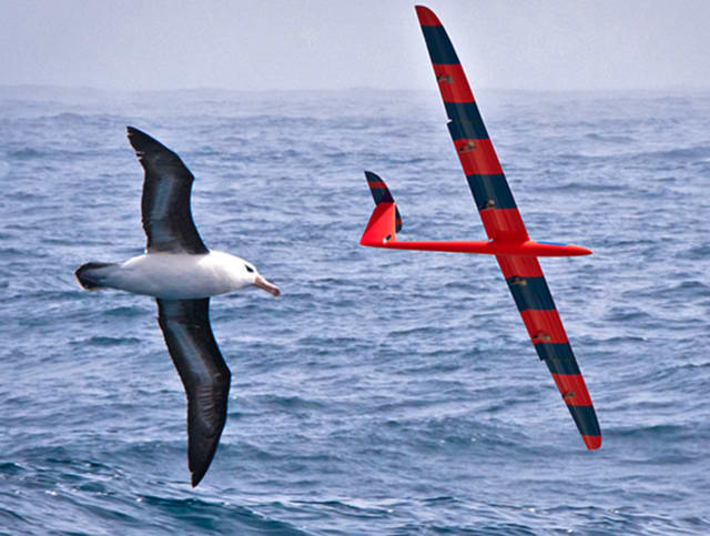 A bird and glider soar in tandem flight. (Image courtesy of Phil Richardson, Woods Hole Oceanographic Institution.)