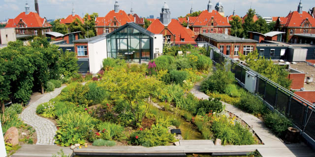An intensive green roof with substantial irrigation, rooftop paths and more. (Image courtesy of Urban Green-Blue Grids.)