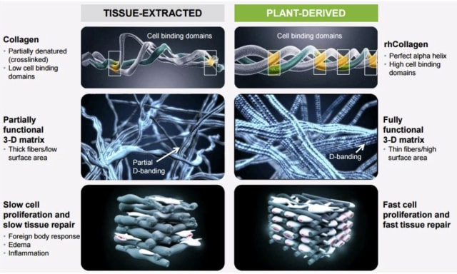 Graphic comparing tissue-extracted collagens to CollPlant's plant-derived rhCollagen, which is used as a foundation for the company's bio-inks. (Image courtesy of CollPlant Biotechnologies.)