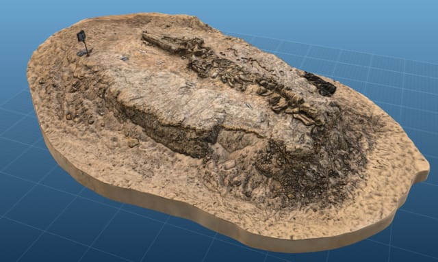 3D model of fossil whale MPC 675 from Cerro Ballena. (Image courtesy of Smithsonian.)