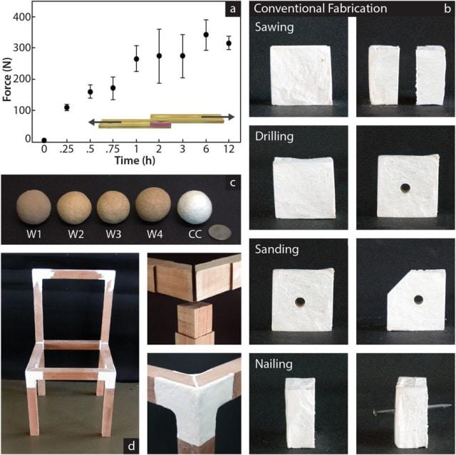 "The team performed various wood-working techniques on the material. In figure (d), FLAM was used to attach pieces of wood together to form a chair. According to the paper, ""Full strength is achieved after 1 hour, from that point 21 mg of dry FLAM covering an area of 9.3 × 9.3 mm holds the equivalent to 29.02 ± 6.35 kg."" (Image courtesy of Nature.)"