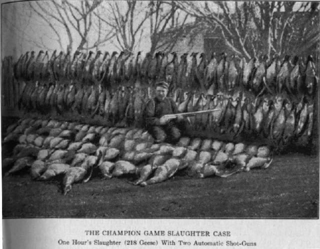 "All in an hour's work. A ""market hunter"" poses with over 200 geese killed in an hour, a new California record in 1906. (Image courtesy of An Eccentric Culinary History.)"
