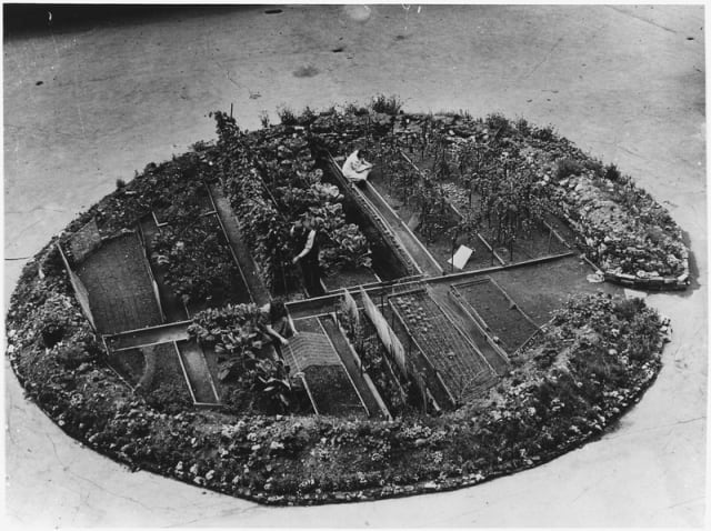 A victory garden in a bomb crater in London during WWII.