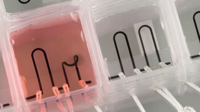 Organ-on-a-chip. (Image courtesy of Phys.org.)