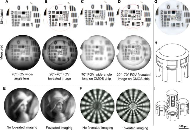 The images above demonstrate the type of image that the foveated lenses can capture. (Image courtesy of Science Advances.)