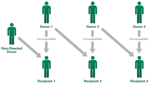 In a paired exchange, multiple incompatible donors are matched with compatible recipients to create a donation chain. (Image courtesy of Kidney Link.)