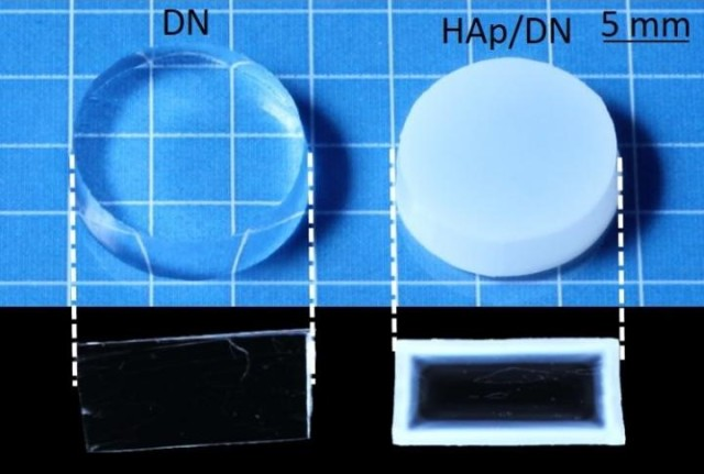 The DN gel and the Hap/DN gel. (Image courtesy of Hokkaido University.)