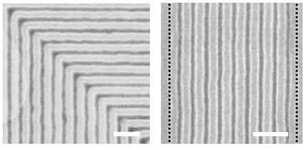 Scanning electron micrograph images of self-assembled block copolymers. A new technique improves resolution and density of the desired patterns by tenfold (right; black bars indicate period of the initial template) and works even with 90-degree bends (left). Scale bars represent 200 nm. (Image courtesy of Scientific Reports.)