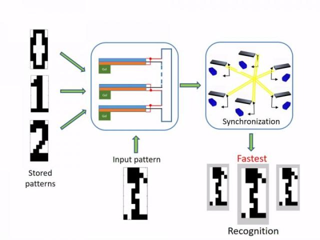 Illustration of the pattern recognition process performed by the hybrid gel oscillator system. (Image courtesy of Yan Fang.)