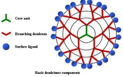 Dendrimer structure. (Image courtesy of Biomedical Engineering, University of California, Irvine.)