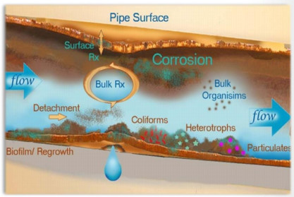 A diagram shows the different types of contaminants that can form in a pipe while the water is traveling to its destination. (Image courtesy of the EPA.)