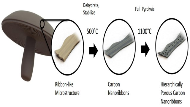 Diagram showing how mushrooms are turned into a material for battery anodes. (Image courtesy of University of California, Riverside.)